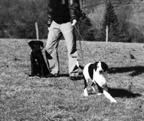 Milla in der Hundeschule