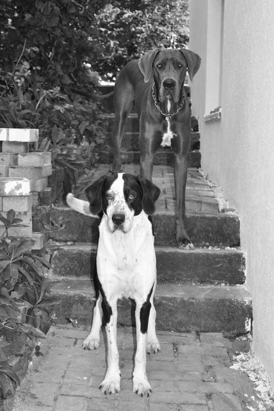 Dogge Schröder und Milla im Garten