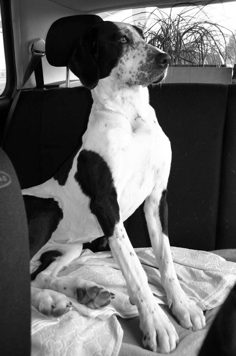 Autofahrt mit Hund
