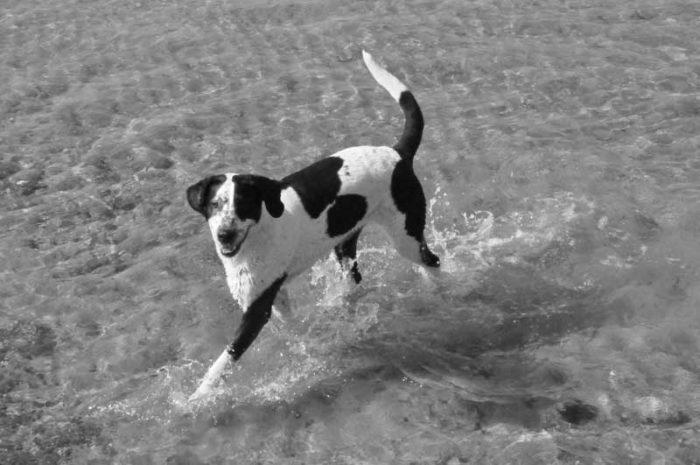 mit Hunden Schwimmen