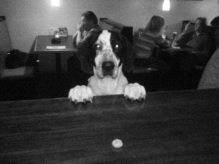 Mit Hund im Kino